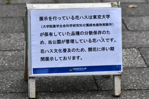 昭和記念公園201707