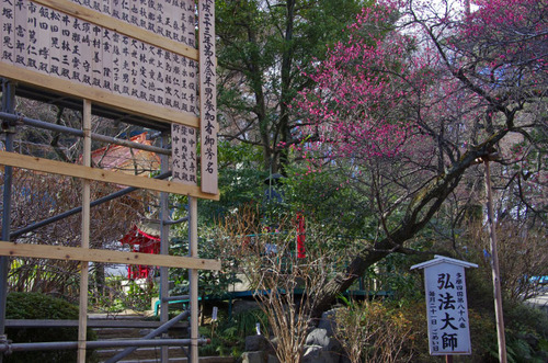 高幡不動尊201101-6