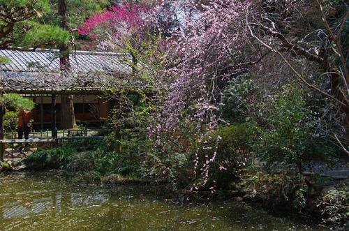 京王百草園201204-7