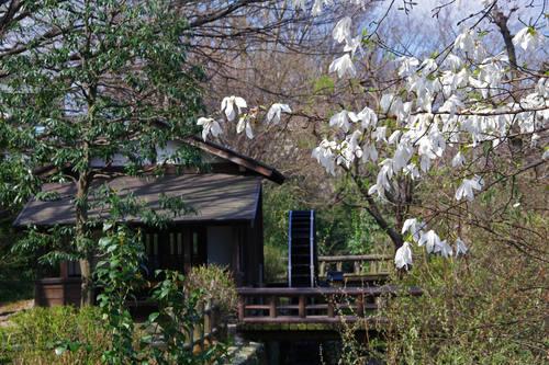 散歩道の春201003-15