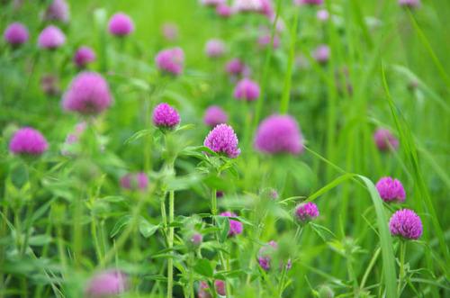 河川敷の花201207-3