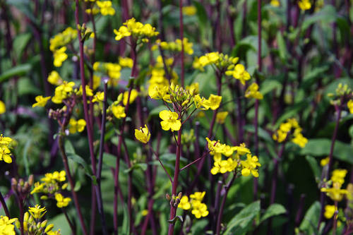 畑の花201004-1