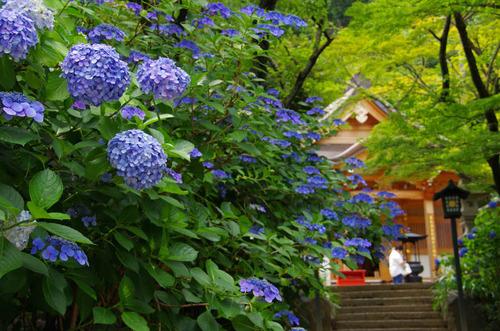 高幡不動201206-7