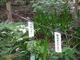 緑の高幡不動0518-3