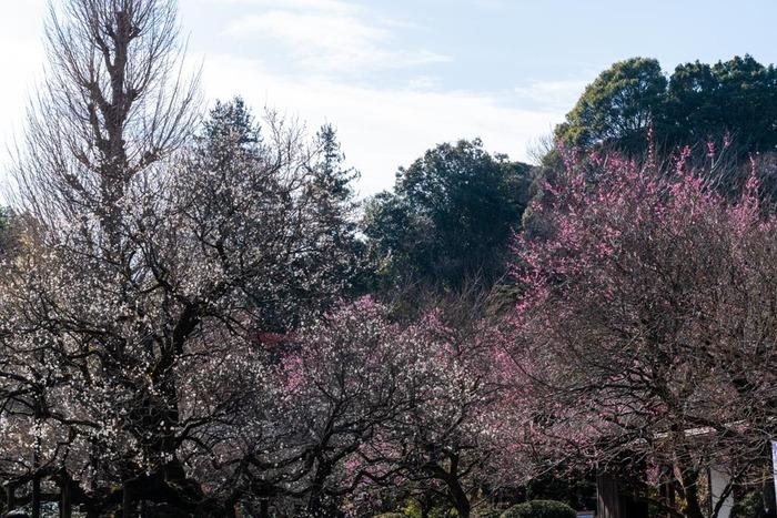 京王百草園201902