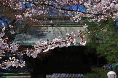 高幡不動尊20100327-2