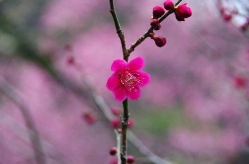 京王百草園201203-6