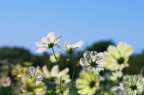 昭和記念公園201310-2