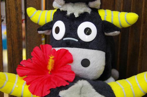 由布島の花201108-4