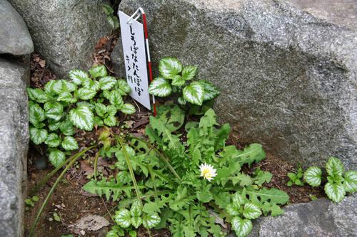 高幡不動尊春201004-2