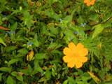 秋の草花-1
