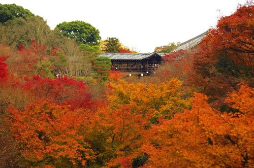 京都東福寺201211-1