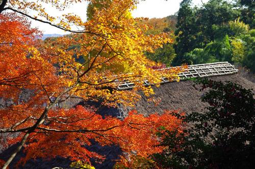 京王百草園201311-10