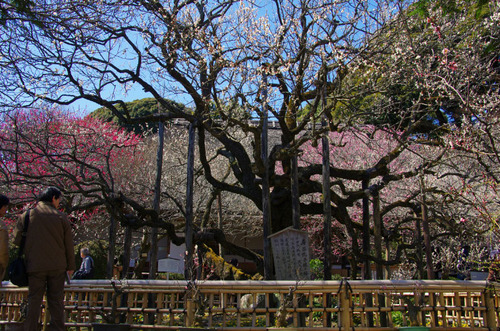 京王百草園201103-1