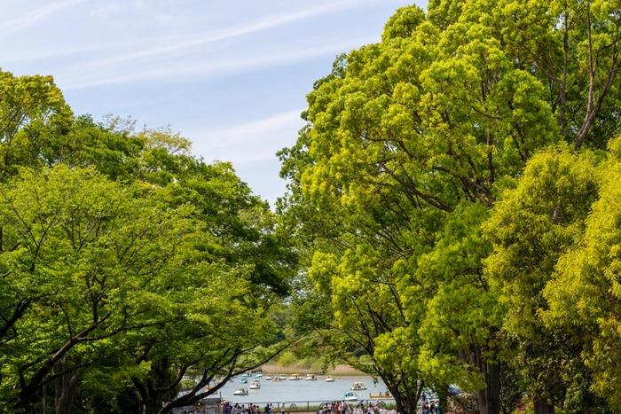 昭和記念公園201905