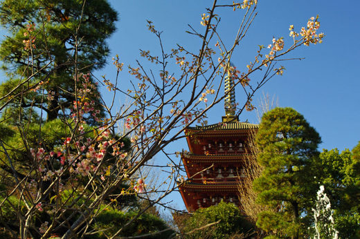 高幡不動尊20091206-7