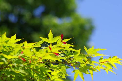 昭和記念公園201205-9