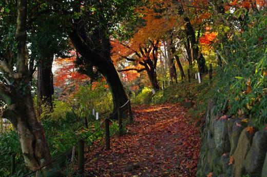 高幡不動尊20091206-5