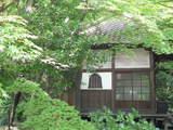 緑の高幡不動0517-1