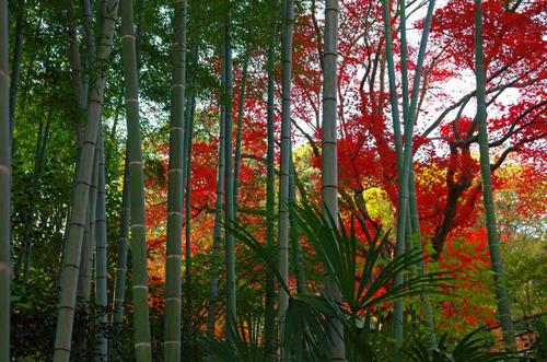 京王百草園201311-12