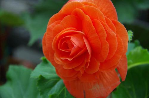 神代植物園2011-10