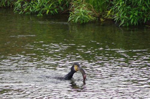 梅雨時の鳥たち2011-4