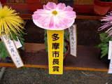 高幡不動081109-2