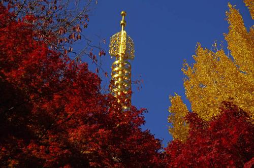 高幡不動尊201211-13