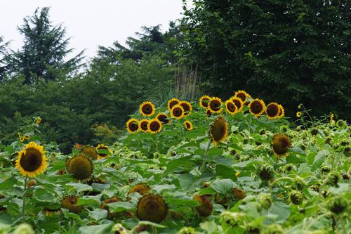 昭和記念公園20100814-3