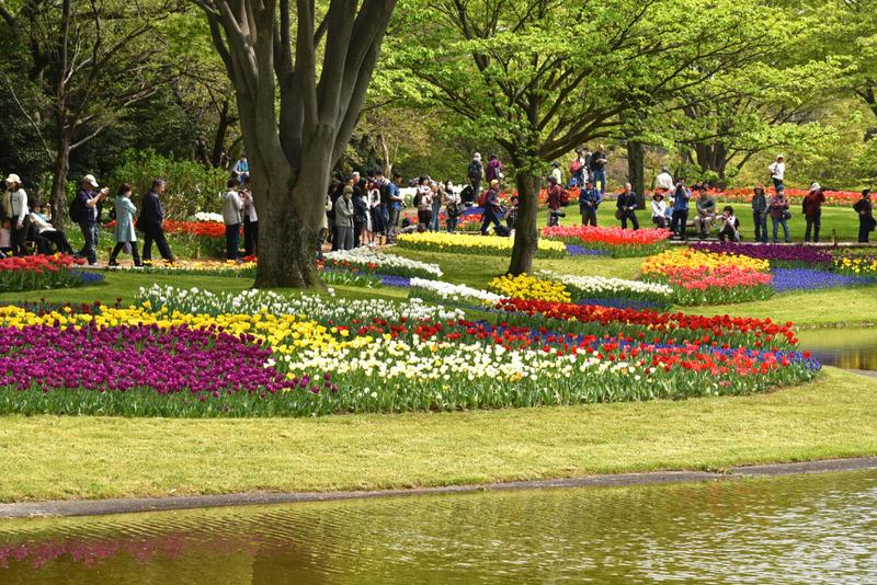 昭和記念公園チューリップ