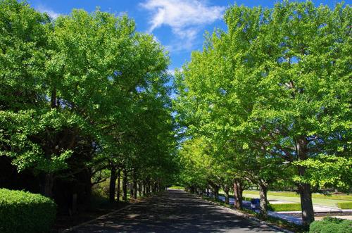 昭和記念公園201109-2