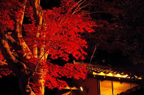 京王百草園201311-9