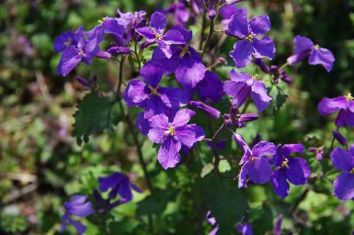 畑の花201004-8
