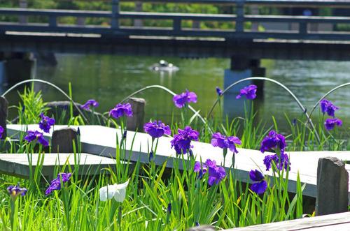 昭和記念公園201406-11