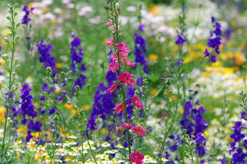 昭和記念公園201006-7