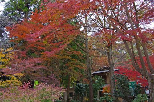 高尾山201111-20