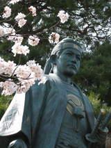 土方桜-2