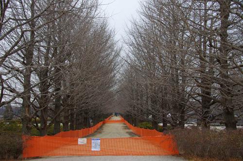 昭和記念公園201201-2