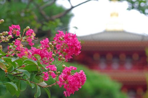 高幡不動201409-3
