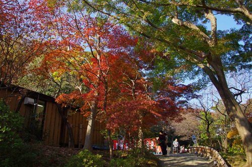 京王百草園201111-2