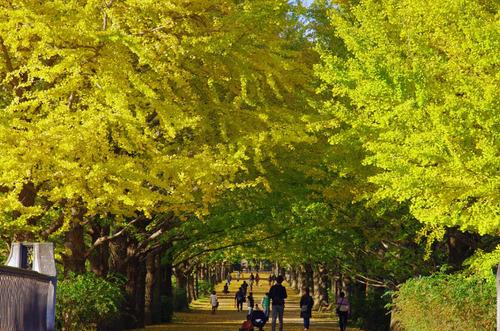 昭和記念公園201311-2