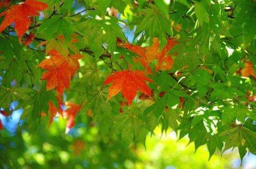 昭和記念公園201310-10