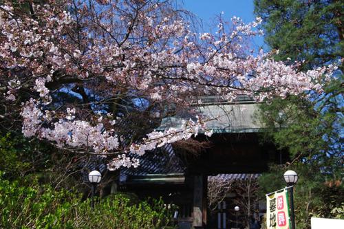 高幡不動尊201103-1