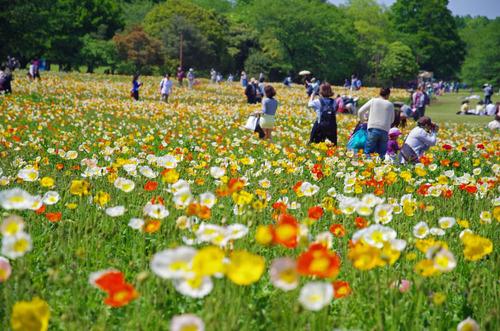 昭和記念公園201405-10