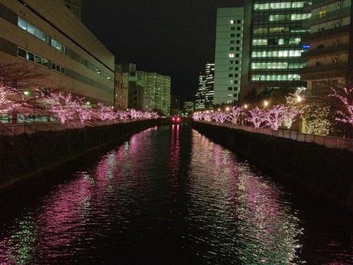 目黒川冬の桜201112-2