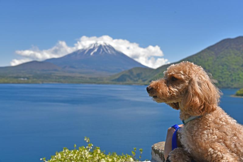 空之介と富士山