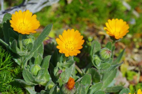 春の花201103-10