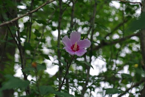 昭和記念公園20100814-2
