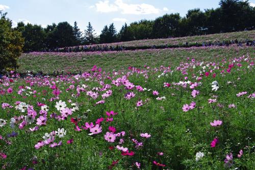 昭和記念公園201105-1