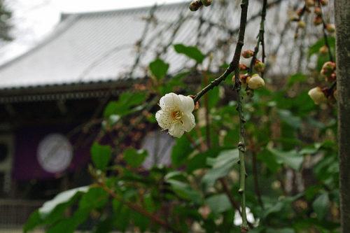 曇りの高幡不動尊2010-1